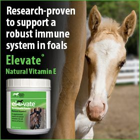 280x280-Elevate-natural-vitamin-e-immune-foals