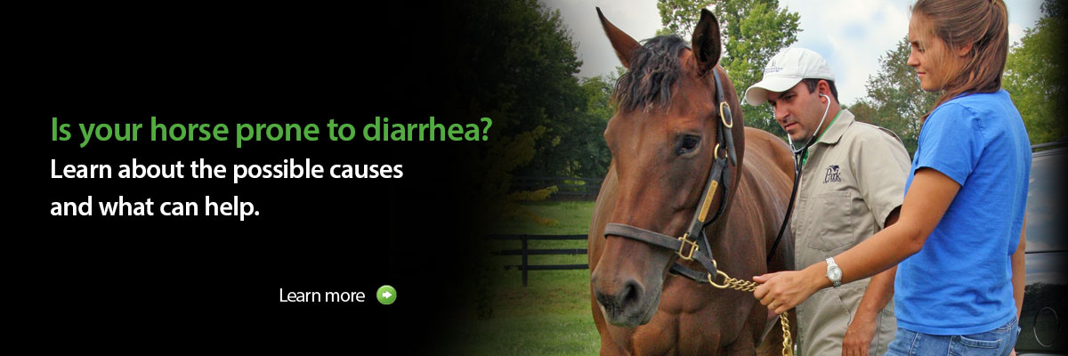 Is your horse prone to diarrhea?