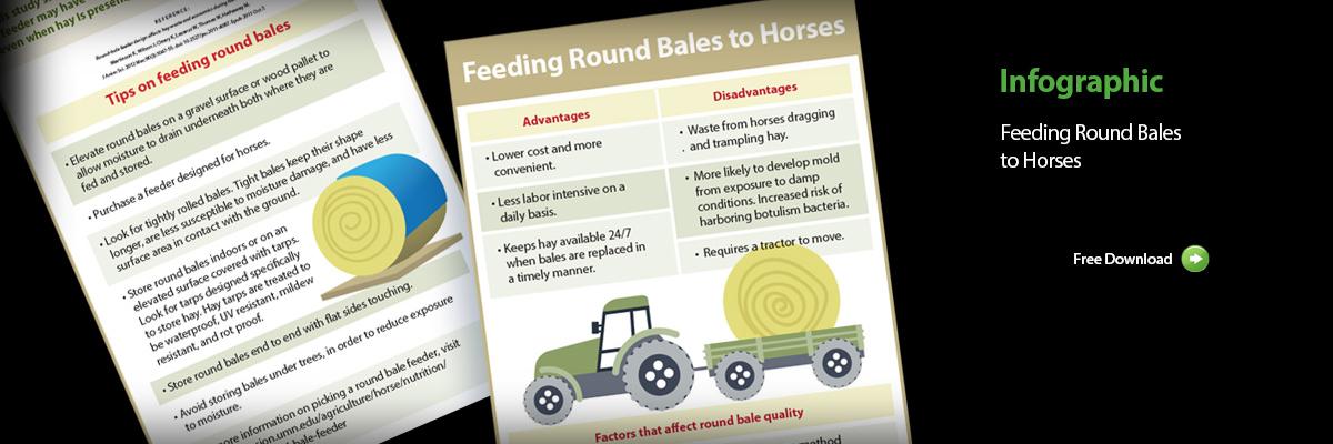 Feeding-round-bales2
