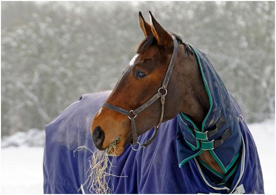 horse-winter-blanket