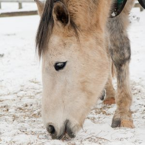 When-Is-It-Too-Cold-to-Bathe-Your-Horse.jpg