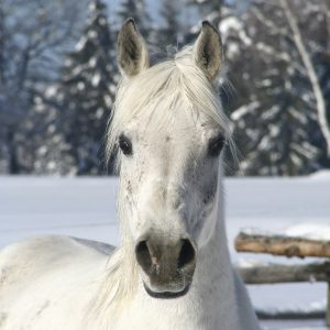 Is-My-Horse-Cold