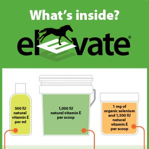 19-104-Elevate-Whats-Inside v5tb