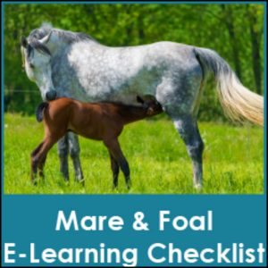 Mare-Foal-Care-Tool