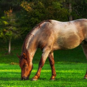 Spring-Turnout-Tips-for-Your-Horse.jpg