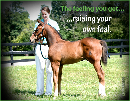 feeling-Raise-your-own-foal