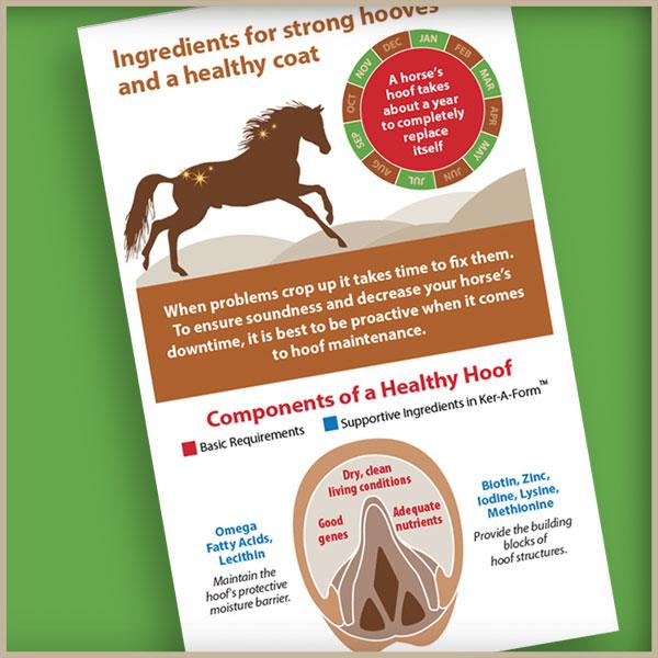 Hoof infographic