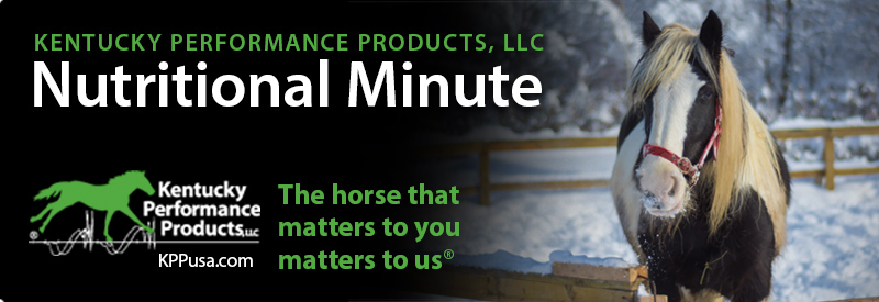 Is your horse ready for winter?