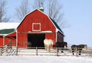 horses red barn snow