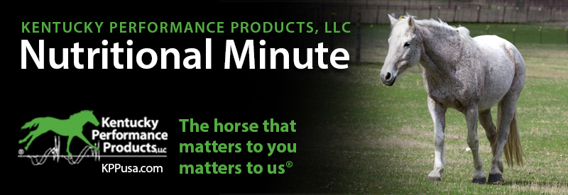 How to Manage Horse Pastures