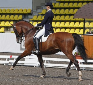 equine-horse-supplements-dressage1