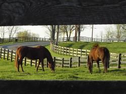 equine-horse-supplements-grazing3