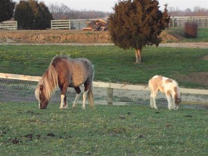 equine-horse-supplements-grazing4