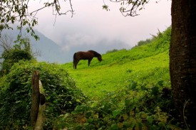 equine-horse-supplements-grazing5