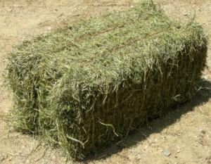 equine-horse-supplements-hay1