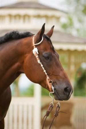 equine-horse-supplements-headshot4