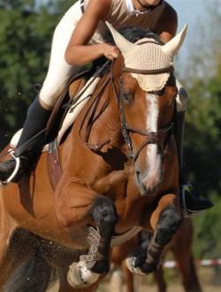 equine-horse-supplements-jumper2