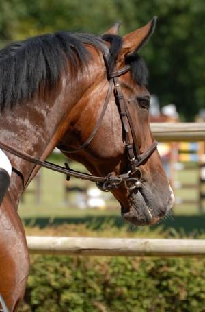 equine-horse-supplements-jumper3
