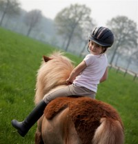 equine-horse-supplements-pony1