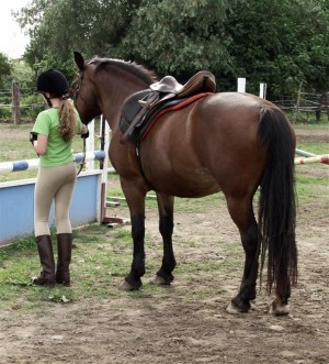equine-horse-supplements-pony2