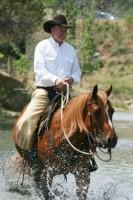most-quarter-horses