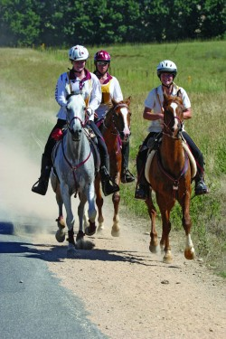 equine-horse-supplements-endurance