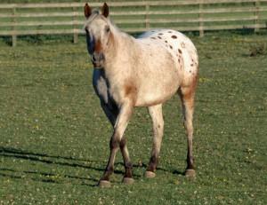 equine-horse-supplements-grazing7