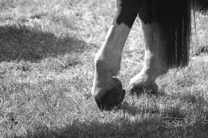 equine-horse-supplements-hoof-leg
