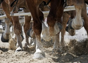 equine-horse-supplements-hooves