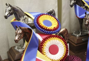 equine-horse-supplements-ribbon