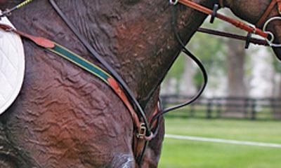 equine-horse-supplements-sweaty-horse