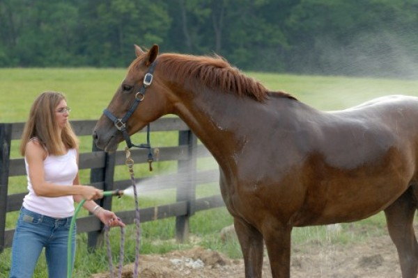 how to keep flies off horses naturally