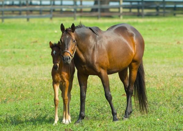 Pictures Stallion Breeding Mare for Pinterest