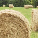 equine-horse-supplements-hay4