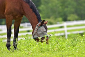 equine-horse-supplements-fly-mask