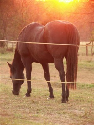 equine-horse-supplements-senior-horse