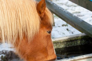 equine-horse-supplements-colic