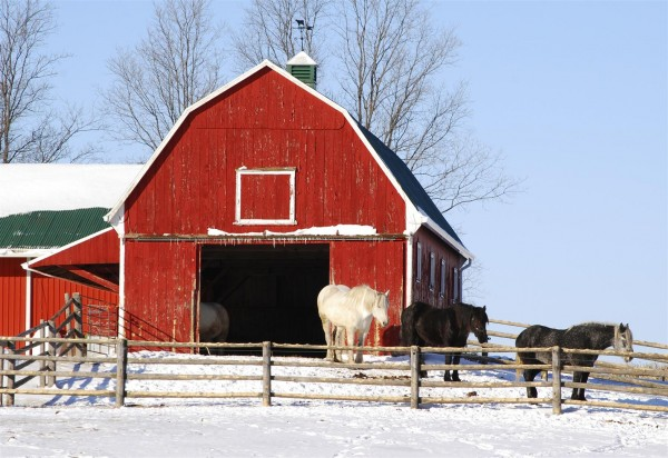 equine-horse-supplements- kentucky-performance-products-barn-winter