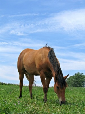 equine-horse-supplements-grazing