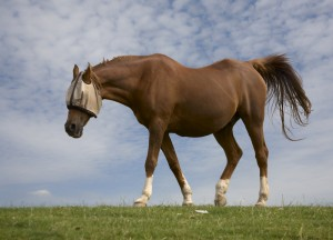 equine-horse-supplements-kentucky-performance-products-joint