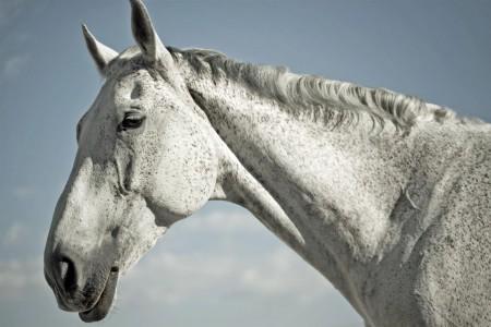 equine-horse-supplements-older-horse
