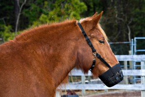 equine-horse-supplements-muzzle