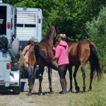Ensure that your horses are thoroughly trained to load onto a trailer so that they can be evacuated easily in case of an emergency.