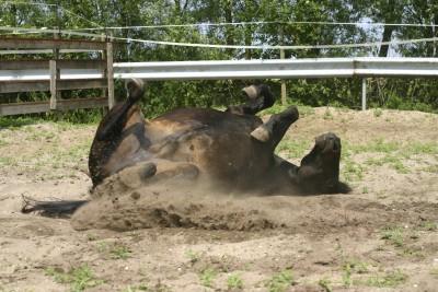 Rolling pony