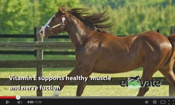 kentucky-performance-products-elevate-natural-vitamin-e