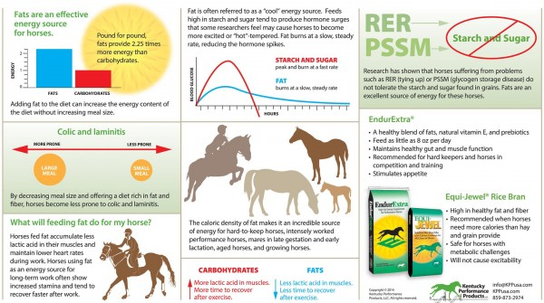 14-222 Fats are and effective energy source for horses (Large)