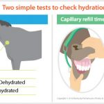 16-170 How to check if your horse is dehydrated