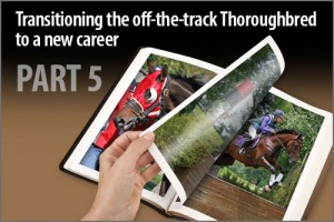 Transitioning the off-the-track Thoroughbred to a new career Part-5