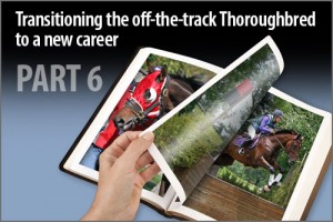 Transitioning the off-the-track Thoroughbred to a new career Part-6