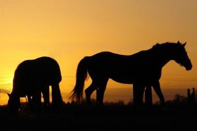 summer-horses (Large)